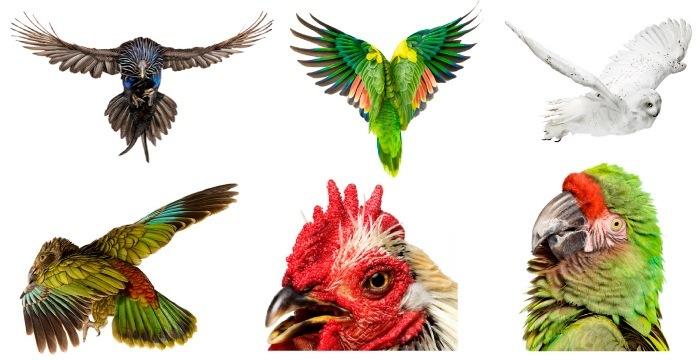 book Bird by Andrew Zuckerman